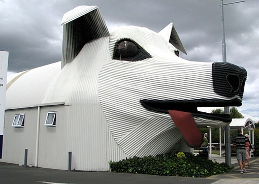 sheepdog-tirau-waikato-new-zealand