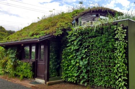 Ecotelhado verde planta decoracao arquitetura sustentabilidade arquitete suas ideias (8)