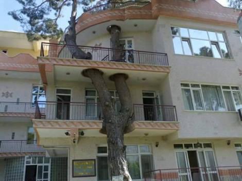 adaptacao arquitetura relfexao natureza sustentabilidade arquitete suas ideias 07